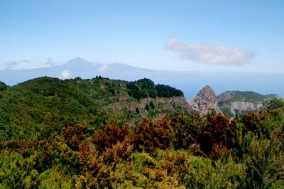 Wald mit Ausblick Teide