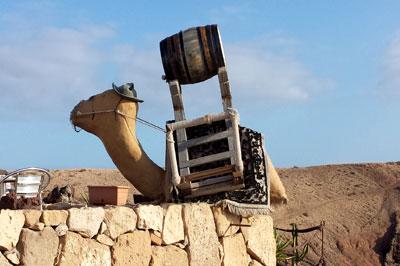 Wein Kamel