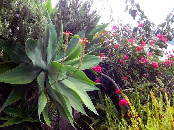 Pflanzen auf La Gomera