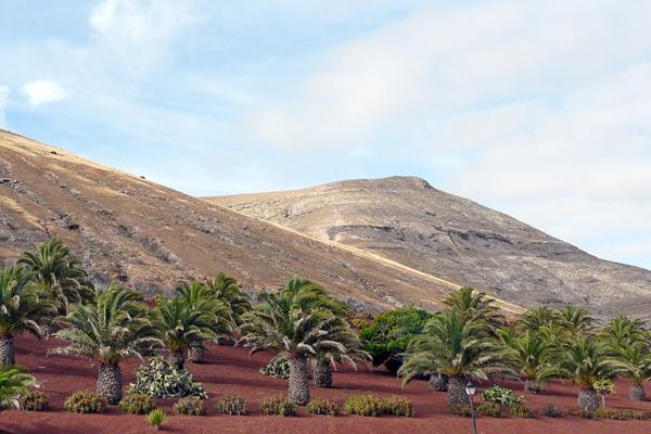 Landschaft mit Palmen auf Lanzarote