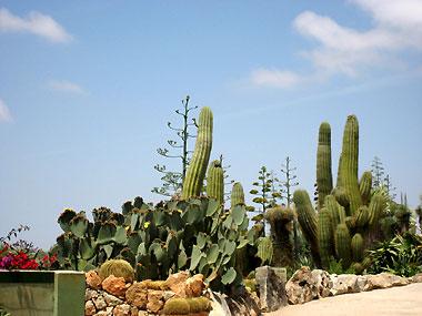 Botanischer Garten Botanicactus bei Ses Salines