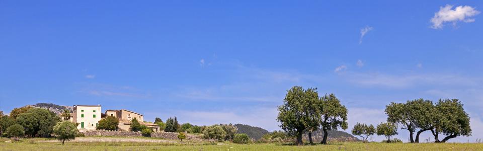 Buger Mallorca