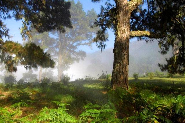 Landschaft und Wald