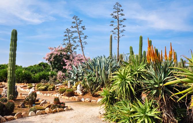 botanischer Garten Botanicactus